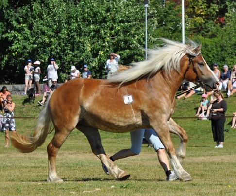 Första häst ut att visas, Eira som också är till salu, ägare Cecilia Hamilton