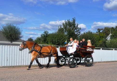 Strålande väder, strålande brudpar, strålande häst. Allting är bara bäst! Nu önskar vi en fin fest!