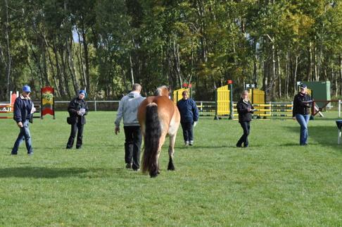 Hästarna granskas noga av juryn som bedömer rastypen, huvud hals och bål, extremiternas (benen) korrekthet, rörelser i både skritt och trav. Allt vägs ihop med intryck som hästen utstrålar.