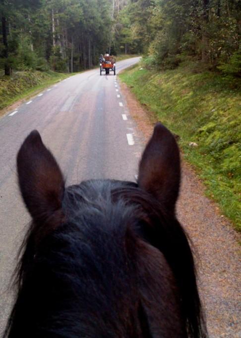 Endel vill  åka häst och vagn medan andra vill ta en ridtur.