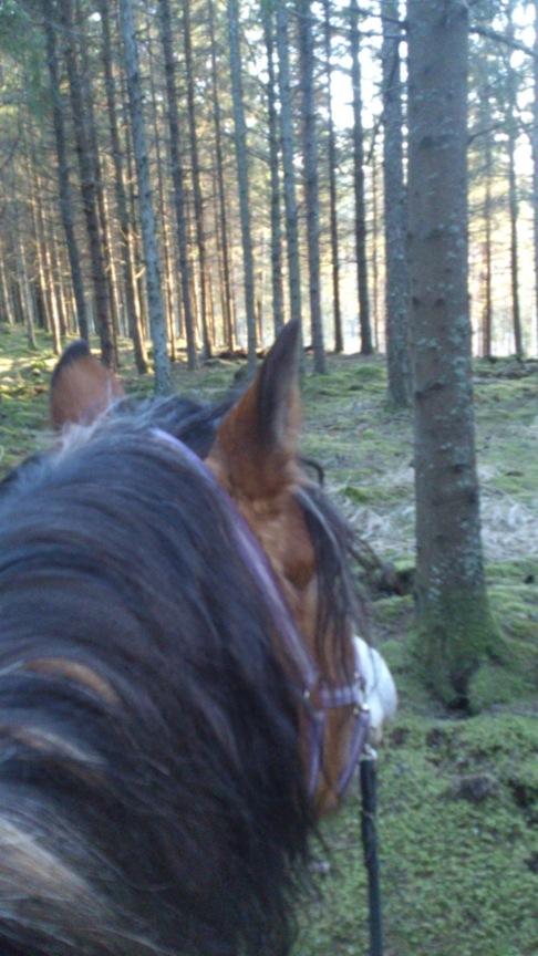 Barbacka ridtur i skogen. CAHOM