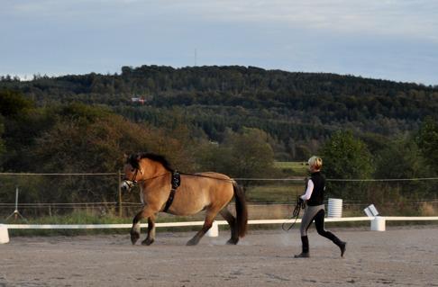 Tömkörning innan ridpasset för att vi skulle få se hur fint man kan arbeta med sin häst från marken.
