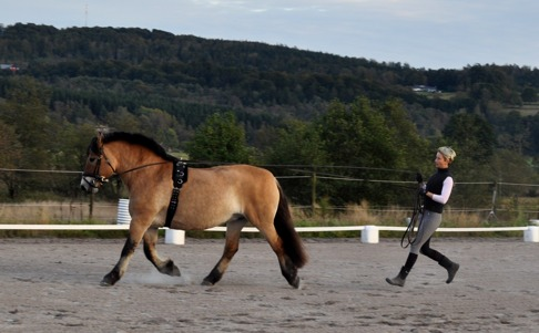Bosareds Dorte är en mycket arbetsvillig nordsvensk brukshäst. Åsa har ägt Dorte i 12 år och utbildat henne. Ökad trav...... hur snyggt som helst.
