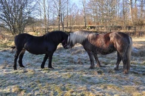 Molly och Unna hälsar på varandra....