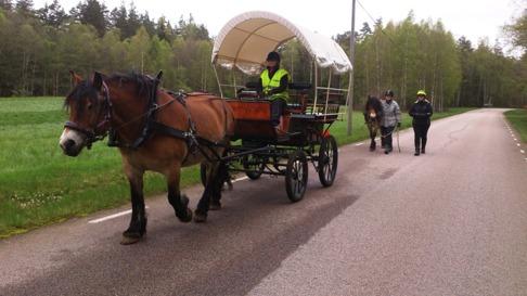Livet är som bäst när man kör häst! Ylva kör Liiv.
