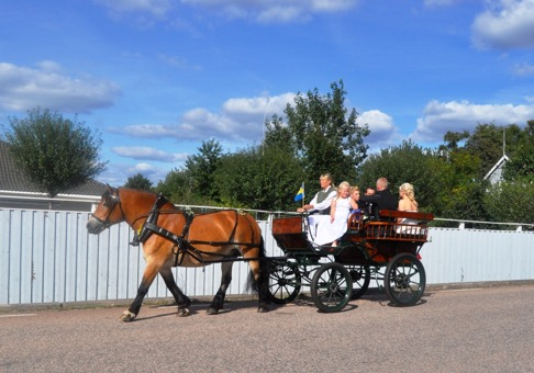 Vägen från kyrkan till festlokalen med skumpa... Foto: Carina Bengtsson