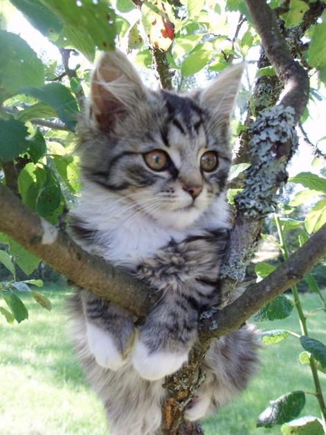 Cahom gör som katten vila dig i form! Halmstad