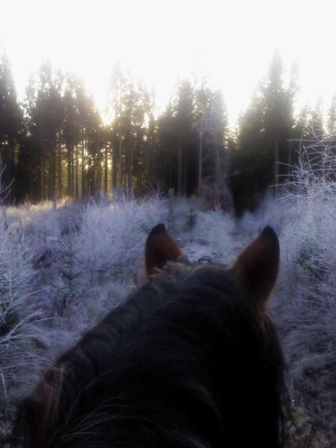 Vintervy från hästryggen Skallinge Gård, Simlångsdalen