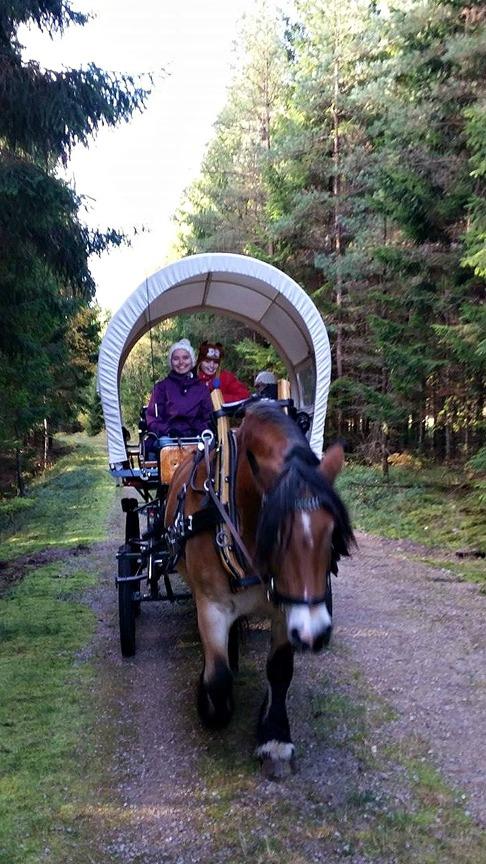 CAHOM häst vagn må bra (10)