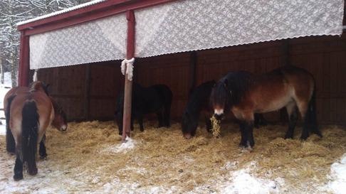 Halm går också bra att äta! Här är deras ligghall som de trivs väldigt bra i.