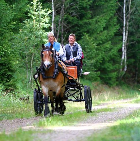 häst och vagn Halmstad Halland