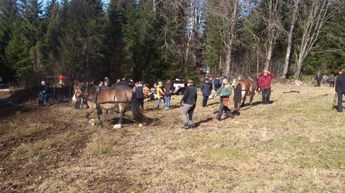 Skogsdag i Burseryd med 12 nordsvenska ekipage som drog ut stockar, massaved från skogen.