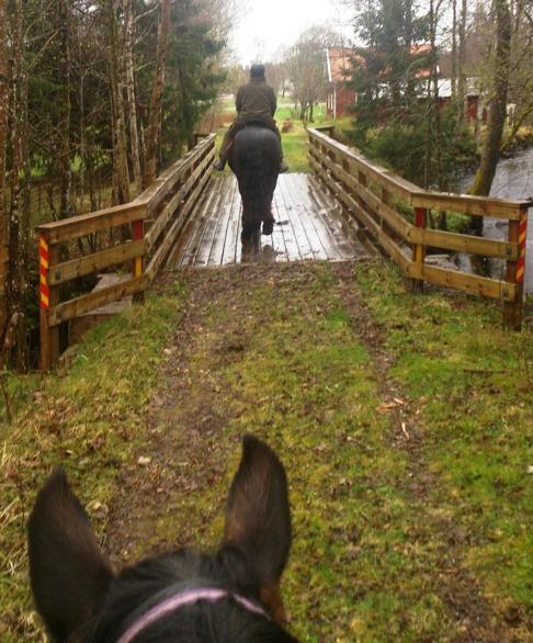 Den här träbron var lite såphal idag men hästarna traskade över.
