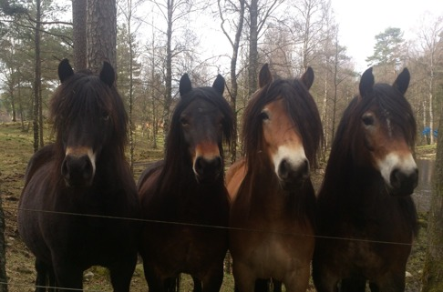 Molly, Fanny, Dolly och Frida