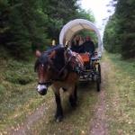 Häst och vagn CAHOM