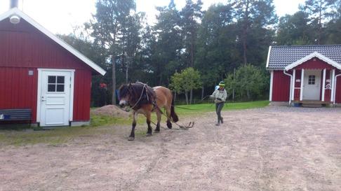 Dolly under inkörning för några år sedan! Våra bästar arbetskamrater är hästarna!