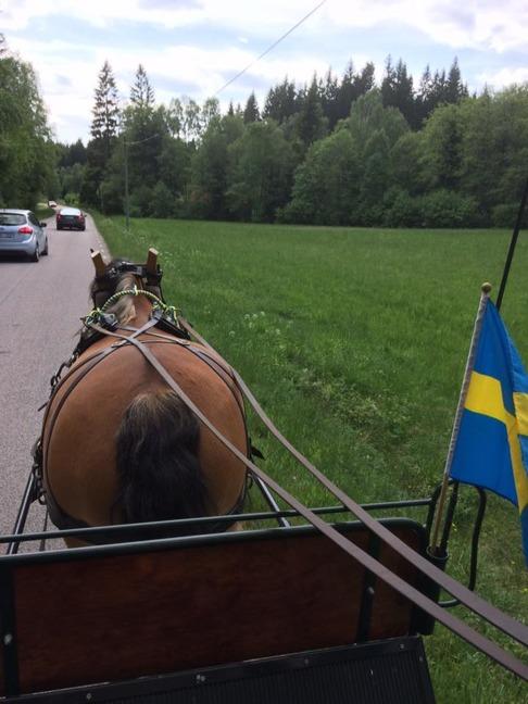 Åka häst och vagn med nordsvenska brukshästar hör nationaldagen till!