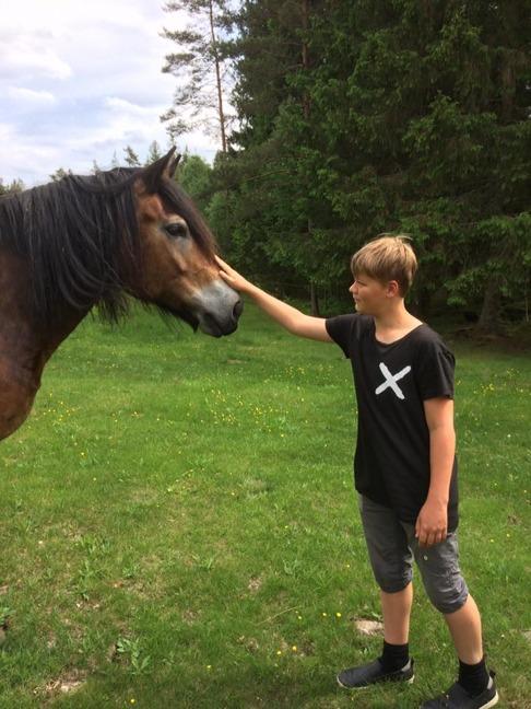 Klappa en nordsvensk häst ingår  när man firar nationaldagen som också är nordsvenska hästens dag.