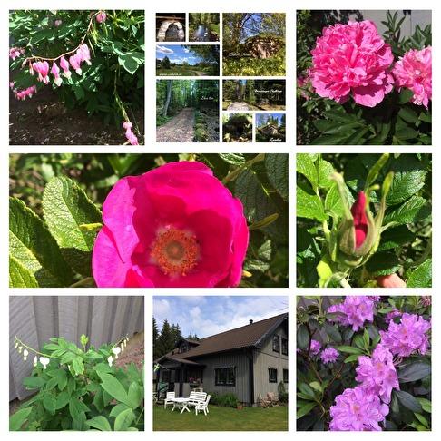 Rehabträdgården, vandring i skogen, eller vid naturhälsoplatsen.