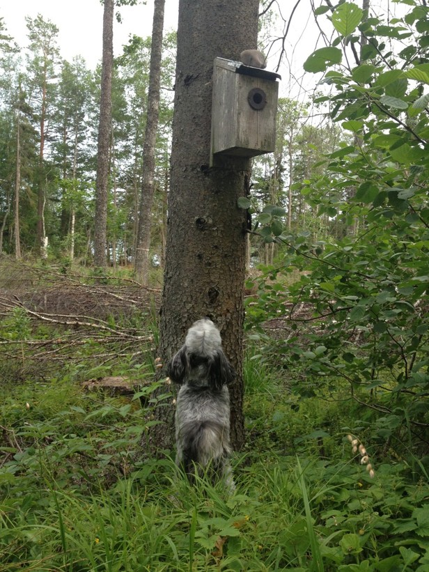 Fågelhund? Fågelskådare?