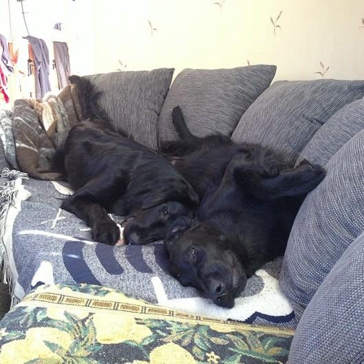 2 trötta grisar