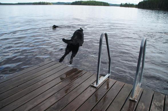 Vimsa hoppar ifrån bryggan..