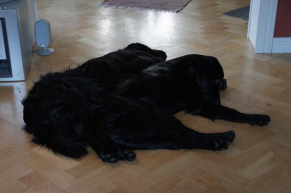 Nöjda hundar - nöjd matte <3