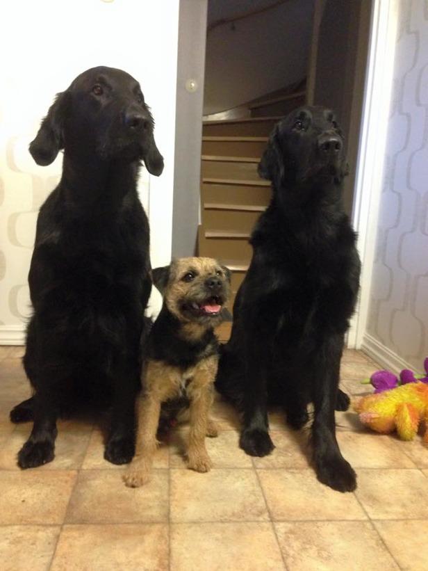 Maya, Skipp & Vimsa