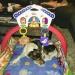 Zorro i babygymmet