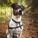 Zorro i spårskogen