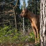 Sally gillar sin skog