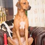 Esther vanliga  pose i fåtöljen