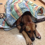 Esther väntar på att få hjälp av veterinären