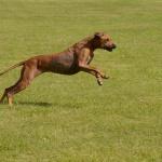 Esther: Tjohoo äntligen får jag lov att springa lite grann