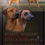 Stella & Memphis