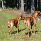 Esther & Stella på Kantarellsök