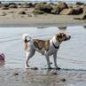Beylas första dag på stranden