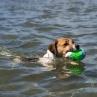 Kolla jag kan simma!