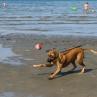Stella på väg med boll för ett dopp
