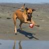 Stella: Fotbollstalangen :)