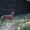 Esther på skogspromenad 1