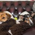 Beyla & Martha: Lite tröttande att fira jul