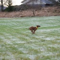 Stella med spring i benen
