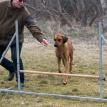 Esther tränar agility