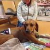 Esther på djursjukhus