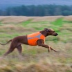 Esther kan springa fort
