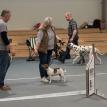 Beyla tränar för Gerhard o´Shea