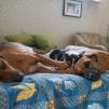 Alla hundarna håller Esther sällskap