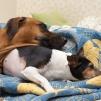 Stella tycker Marta är en skön kudde