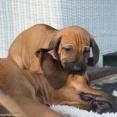 Mr Mörklila leker med mamma